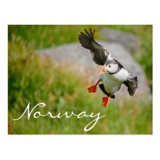 Vuelo del frailecillo en la postal de Noruega