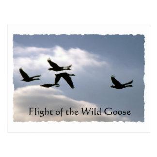 Vuelo del ganso salvaje - postal rasgada de los