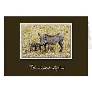 Warthog con las tarjetas del safari de los