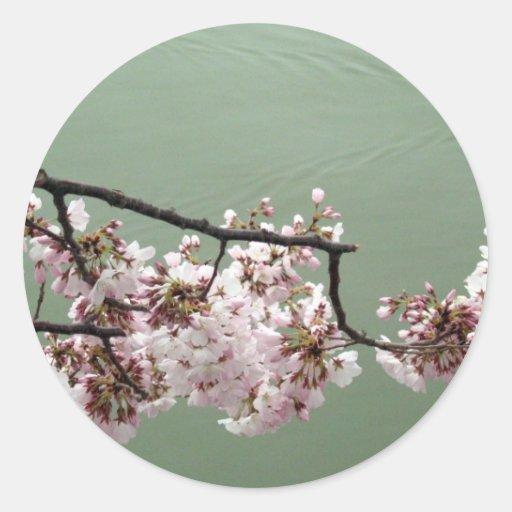 Washington DC de la flor de cerezo Pegatina