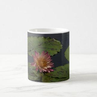 Waterlily rosado taza de café