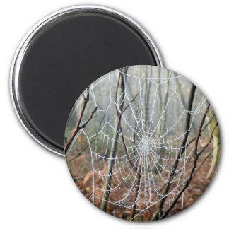 Web del imán europeo de la araña de jardín