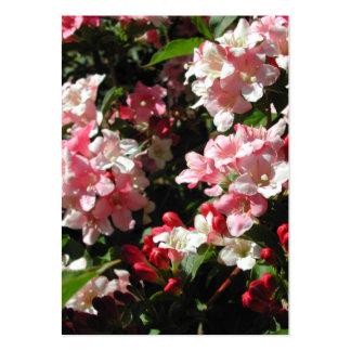 Weigela. Flores rosadas bonitas Tarjetas De Visita Grandes