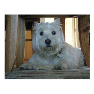 Westie con la postal de la foto del hueso de perro