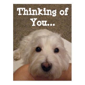Westie que piensa en usted postal de la foto