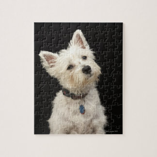Westie (terrier del oeste de la montaña) con el cu puzzle