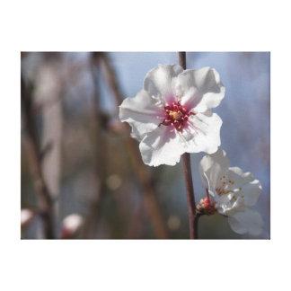 White flower in natural light lienzo