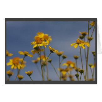 Wildflower amarillo del desierto tarjeta de felicitación