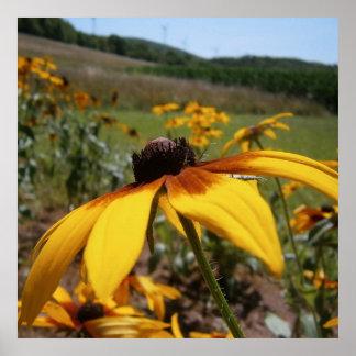 Wildflower amarillo póster