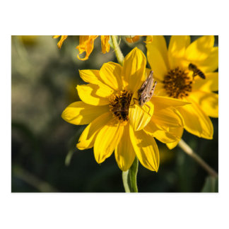 Wildflower con la abeja postal