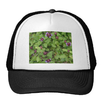 Wildflower púrpura del arcángel gorra