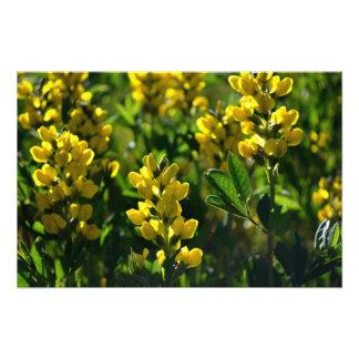 Wildflowers amarillos en las montañas de Sandia Impresiones Fotograficas