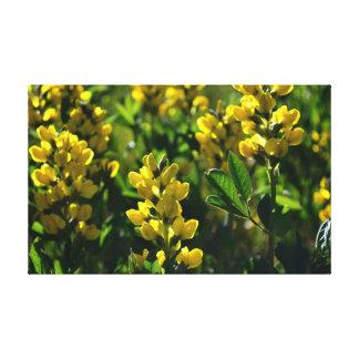 Wildflowers amarillos en las montañas de Sandia Impresiones En Lienzo Estiradas