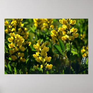 Wildflowers amarillos en las montañas de Sandia Posters