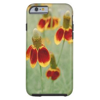 Wildflowers de Tejas del gorra mexicano Funda Resistente iPhone 6