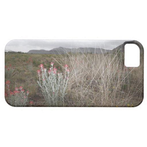 Wildflowers y plantas, Del Río, Tejas, los E.E.U.U iPhone 5 Protector