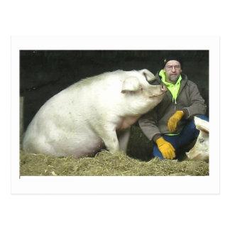 Winston el cerdo postal