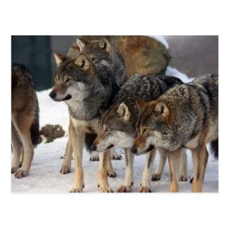 wolfpack postal