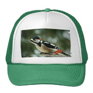Woodpecker pájaro carpintero de multicolor - foto: gorras