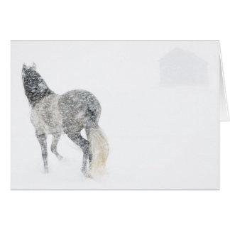 Yegua en una tarjeta de felicitación del caballo