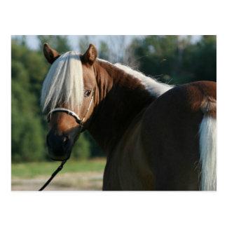 Yegua miniatura del caballo de la bahía de plata postal