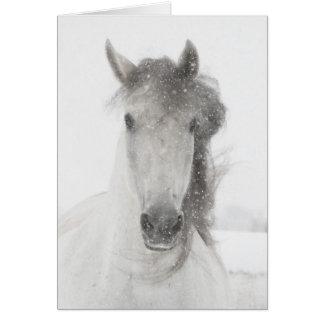 Yegua Nevado - tarjeta de felicitación del caballo