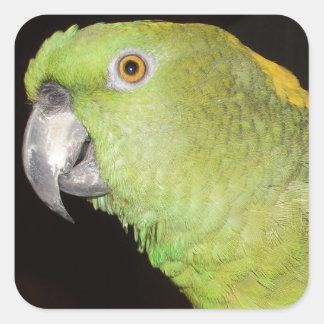 Yellownape el Amazonas Calcomania Cuadrada Personalizada