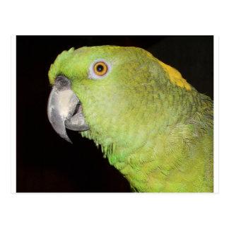 Yellownape el Amazonas Postal