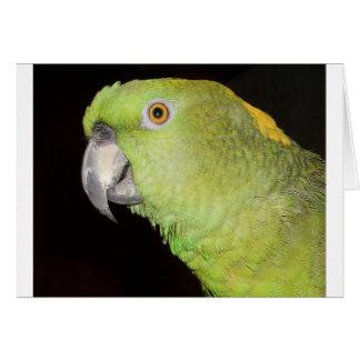 Yellownape el Amazonas Tarjeta