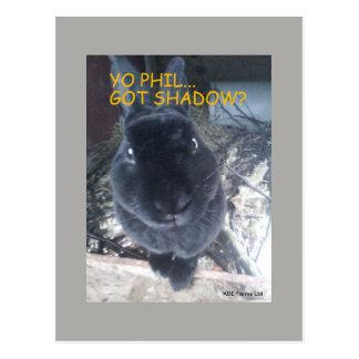 Yo Phil, conseguido la sombra - postal