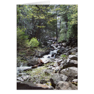 Yosemite en primavera:  Rastro de las caídas de Tarjeta Pequeña