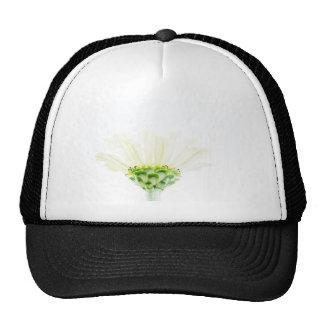 Zinnia blanco simplista gorras de camionero