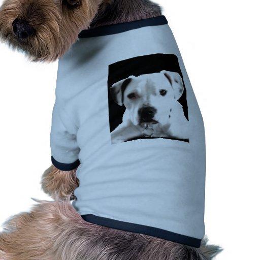 ¡zyta! .jpg ropa de perros